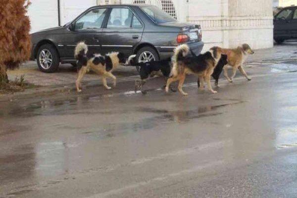 دلیل افزایش سگ های ولگرد در شهرک محلاتی