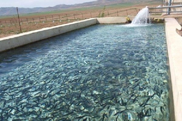 ظرفیت فراوری ماهیان سردآبی در استان به18 هزار تن افزایش می یابد