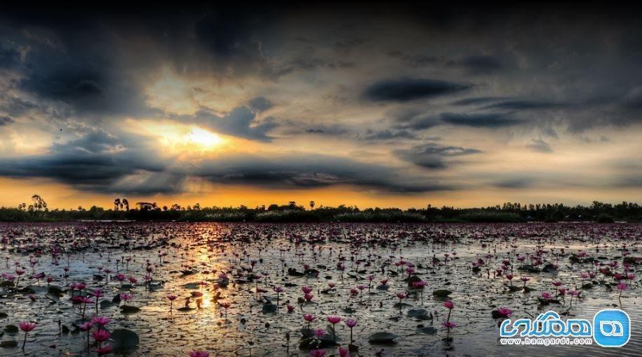 دریاچه نیلوفرهای قرمز تایلند ، باغ دریایی
