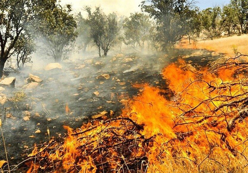 720 هکتار جنگل و مرتع کهگیلویه و بویراحمد در آتش سوخت