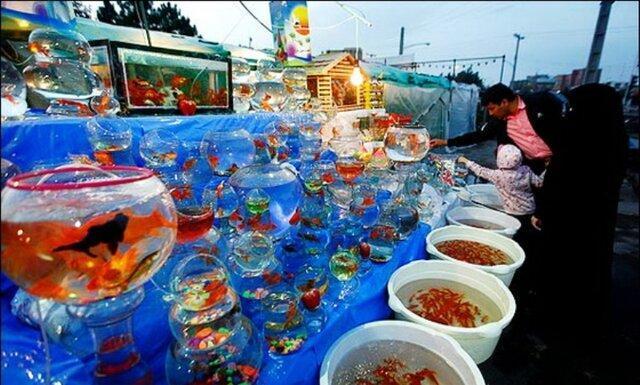 ماهی قرمز سفره عید از چین وارد نمی گردد