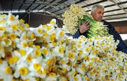صادرات هشت هزار و 281 اصله گل و گیاه از بندر نوشهر