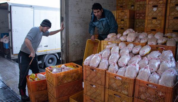 صادرات 4000 تن مرغ در زمان ممنوعیت