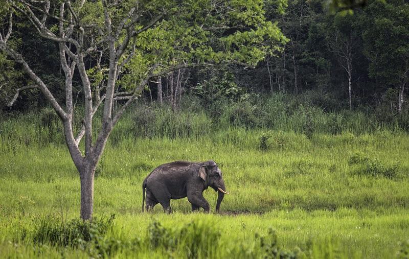معرفی پارک ملی کائو یای در تایلند